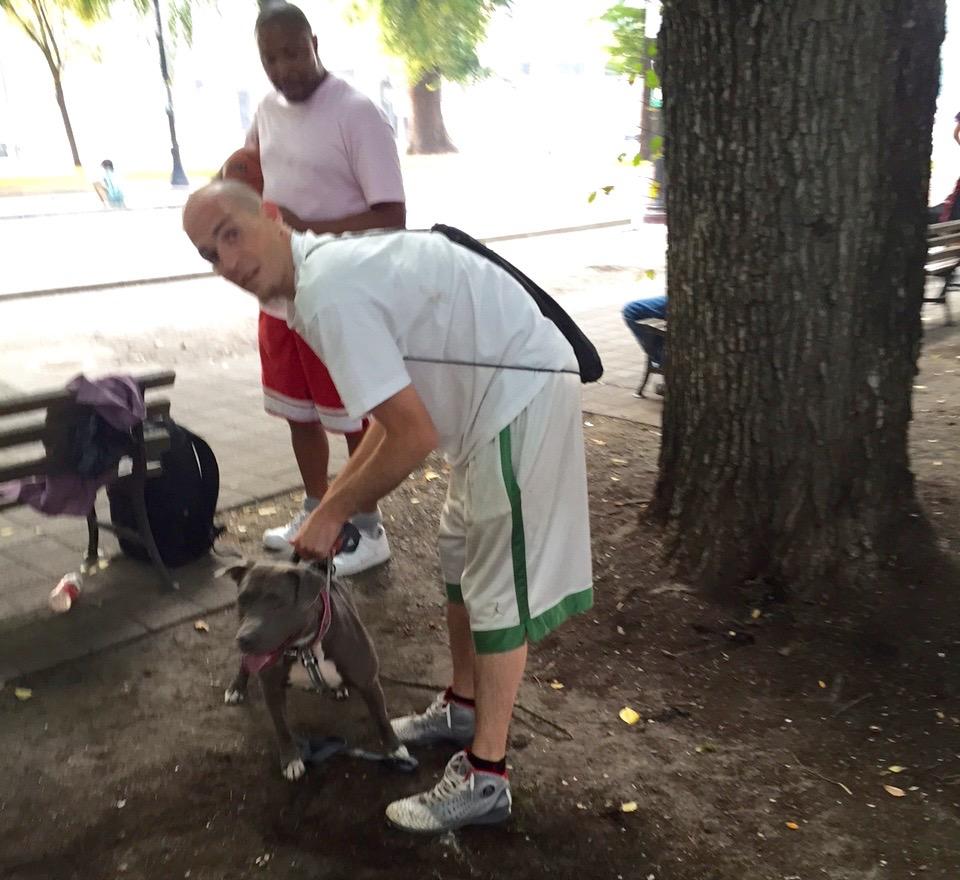 North Park Blocks dog